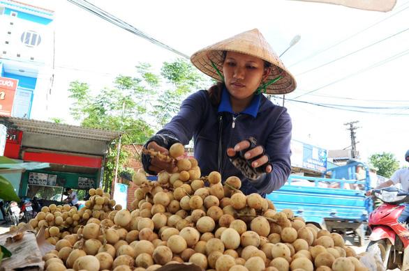 Về Tiên Phước ăn trái bòn bon - Ảnh 15.