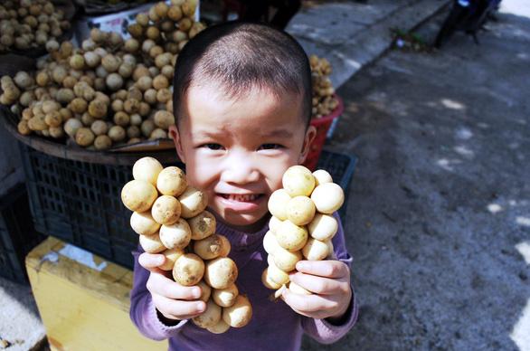 Về Tiên Phước ăn trái bòn bon - Ảnh 16.