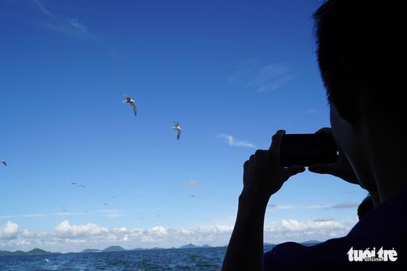 Hải âu săn mồi trên biển Kiên Giang - Ảnh 12.