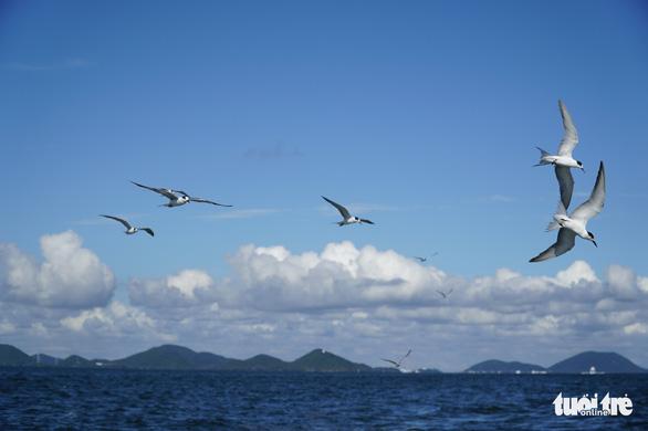 Hải âu săn mồi trên biển Kiên Giang - Ảnh 5.