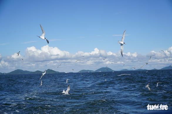 Hải âu săn mồi trên biển Kiên Giang - Ảnh 10.
