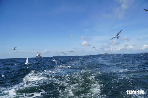 Hải âu săn mồi trên biển Kiên Giang - Ảnh 1.