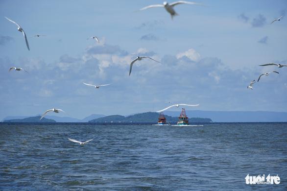 Hải âu săn mồi trên biển Kiên Giang - Ảnh 3.