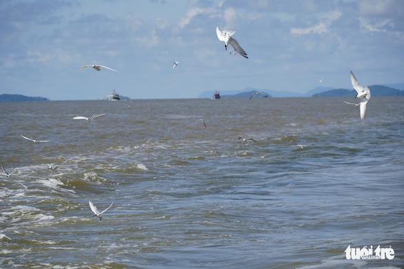 Hải âu săn mồi trên biển Kiên Giang - Ảnh 8.