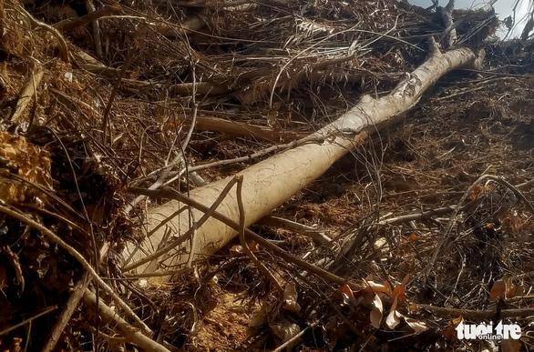 Rừng Khe Cau bị ủi, công an và kiểm lâm chỉ qua chỉ lại - Ảnh 3.
