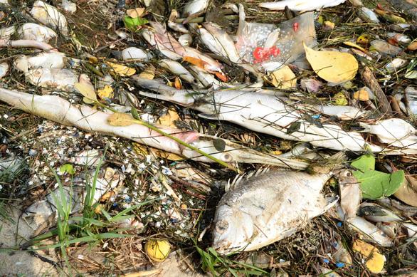 Cá chết trắng ao cạnh sông Trường Giang - Ảnh 5.