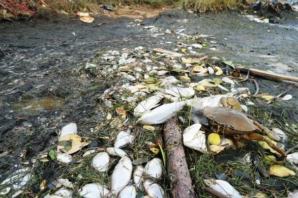 Cá chết trắng ao cạnh sông Trường Giang - Ảnh 1.