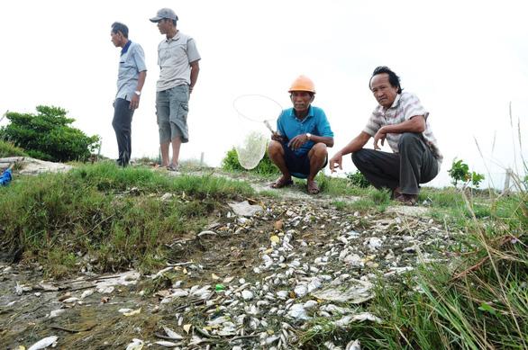 Cá chết trắng ao cạnh sông Trường Giang - Ảnh 4.