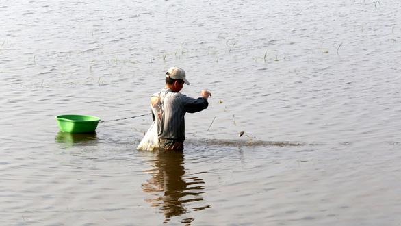 Những mùa cá đồng miền lũ - kỳ 2: Thời vàng son của cá đồng - Ảnh 3.