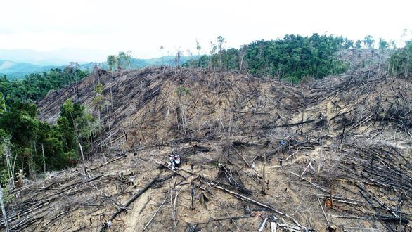 Hai vợ chồng lãnh án vì cạo trọc rừng phòng hộ - Ảnh 1.