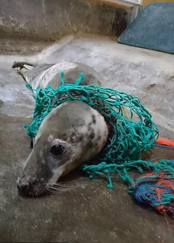 Rác nhựa bủa vây, đại dương kêu cứu - Ảnh 5.