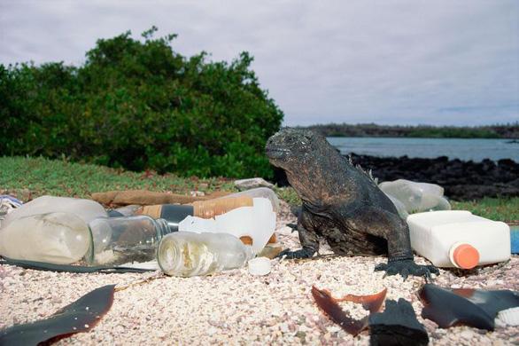 Rác nhựa bủa vây, đại dương kêu cứu - Ảnh 4.