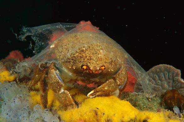Rác nhựa bủa vây, đại dương kêu cứu - Ảnh 3.