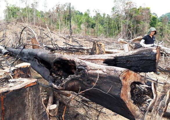Hai vợ chồng lãnh án vì cạo trọc rừng phòng hộ - Ảnh 4.