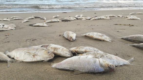 Nhiều cá chết ở bờ biển Đà Nẵng nghi do nổ mìn - Ảnh 1.
