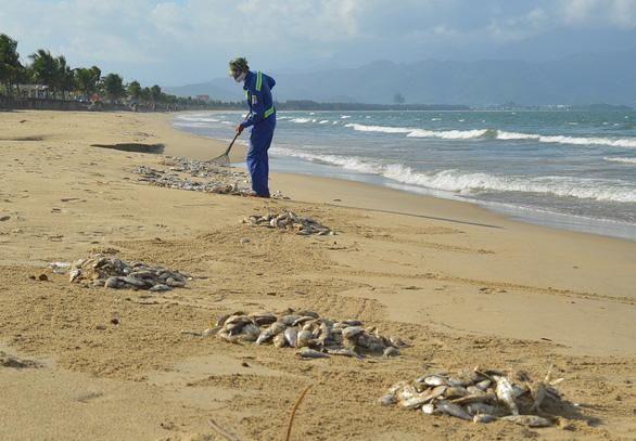 Nhiều cá chết ở bờ biển Đà Nẵng nghi do nổ mìn - Ảnh 2.