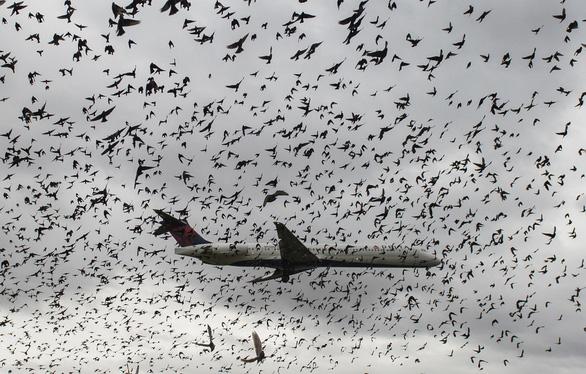 Các sân bay lớn trên thế giới đuổi chim bằng cách nào? - Ảnh 1.