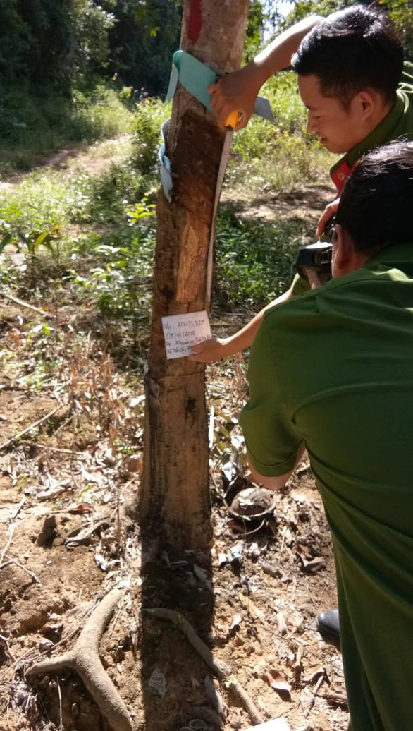 Điều tra vụ người tố cáo phá rừng bị chặt phá vườn cao su - Ảnh 2.