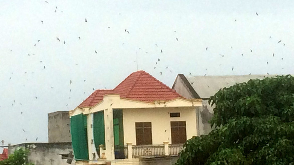 Thảm họa ở làng nuôi chim yến - Ảnh 1.