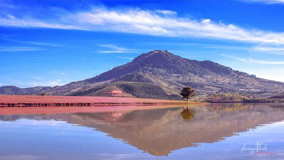 Ngắm đồi cỏ hồng Đà Lạt đẹp như cổ tích - Ảnh 1.