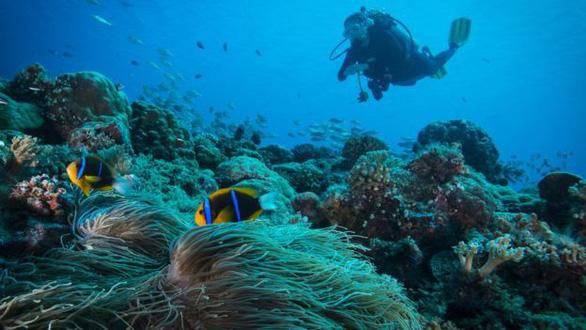 Quốc gia đầu tiên cấm kem chống nắng để bảo vệ san hô - Ảnh 2.