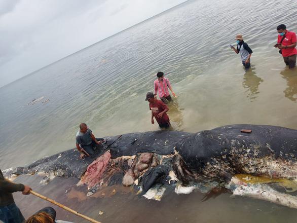 Cá nhà táng chết dạt vào bờ với 5,9kg rác nhựa trong bụng - Ảnh 1.