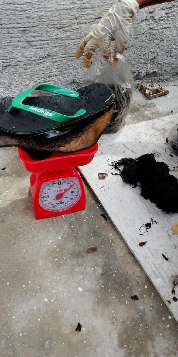 Cá nhà táng chết dạt vào bờ với 5,9kg rác nhựa trong bụng - Ảnh 3.