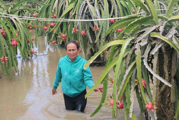 Thủ phủ thanh long Bình Thuận ngập nặng - Ảnh 4.