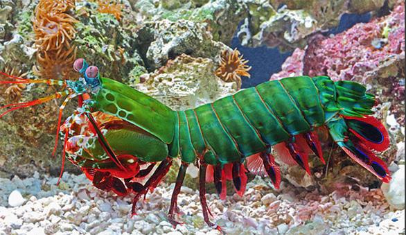Loài cá nhanh như tia chớp khiến giới khoa học choáng váng - Ảnh 5.