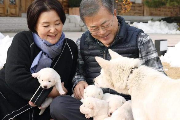 'Món quà hòa bình của lãnh đạo Triều Tiên sinh sôi trên đất Hàn - Ảnh 1.