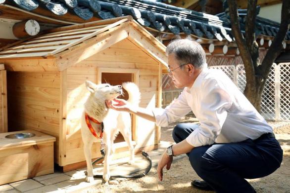 'Món quà hòa bình của lãnh đạo Triều Tiên sinh sôi trên đất Hàn - Ảnh 2.
