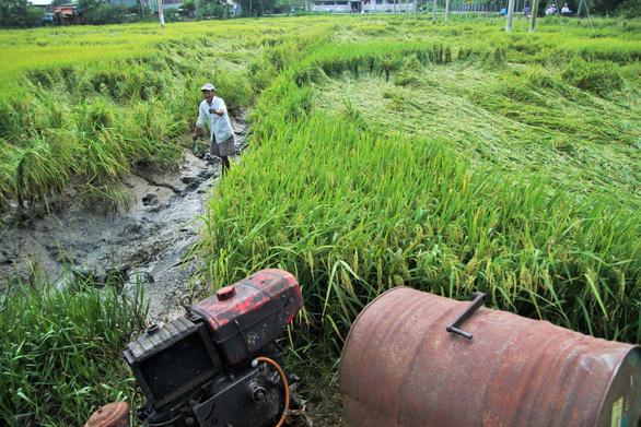 Nông dân Tiền Giang hối hả bơm nước cứu 10.000ha lúa - Ảnh 2.