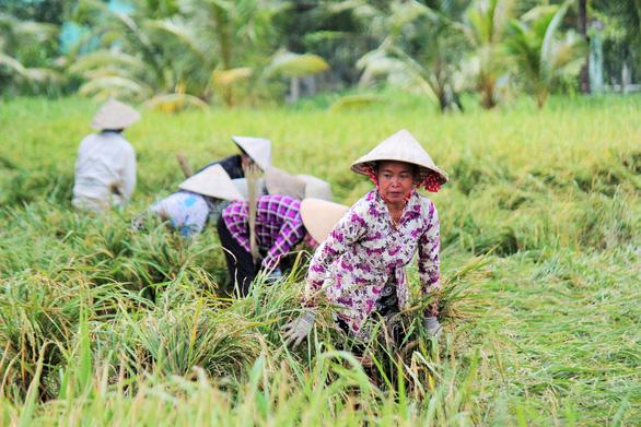 Nông dân Tiền Giang hối hả bơm nước cứu 10.000ha lúa - Ảnh 4.