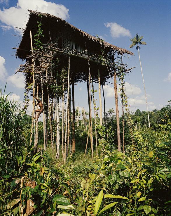 Tới Tây Papua xem bộ lạc Kombai làm nhà cao chót vót - Ảnh 3.