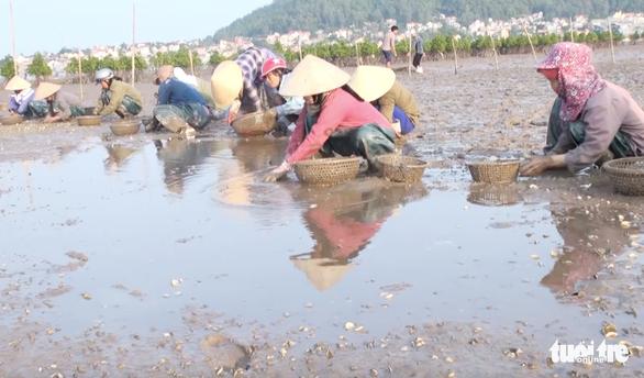 Dân Nghệ An hoang mang khi hàng trăm tấn ngao chết trắng đầm - Ảnh 3.