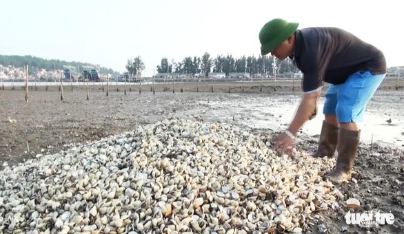 Dân Nghệ An hoang mang khi hàng trăm tấn ngao chết trắng đầm - Ảnh 2.