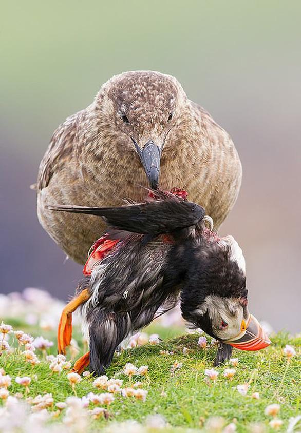 Vẻ đẹp của động vật hoang dã - Ảnh 5.