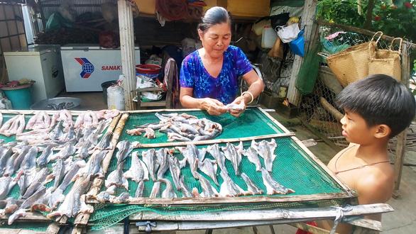 Những mùa cá đồng miền lũ - kỳ cuối: Làm gì để bảo tồn nguồn cá đồng? - Ảnh 1.