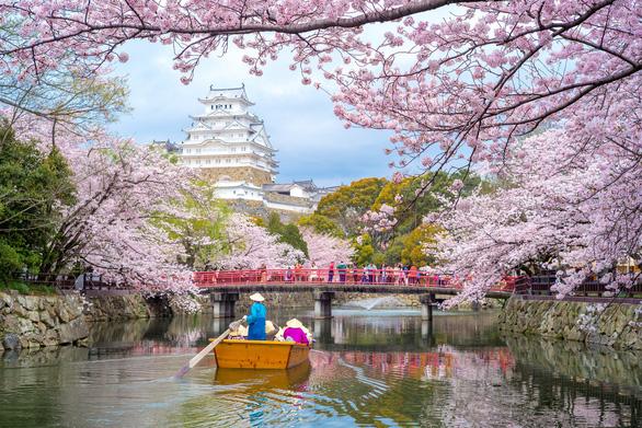 """Đến Nhật ngắm hoa Anh đào bằng """"chuyên cơ"""" - Ảnh 1."""