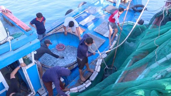 Tận diệt hải sản trong khu bảo tồn biển Lý Sơn - Ảnh 1.