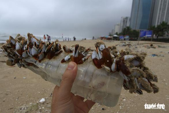 Sinh vật biển theo rác thải trôi dày đặc trên bãi biển Đà Nẵng - Ảnh 1.