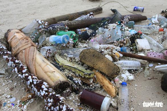 Sinh vật biển theo rác thải trôi dày đặc trên bãi biển Đà Nẵng - Ảnh 5.