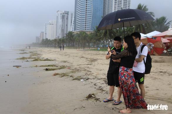 Sinh vật biển theo rác thải trôi dày đặc trên bãi biển Đà Nẵng - Ảnh 6.