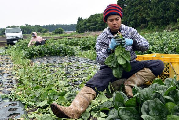 Lao động Việt Nam tại Nhật có thể nhận nhiều ưu đãi - Ảnh 1.