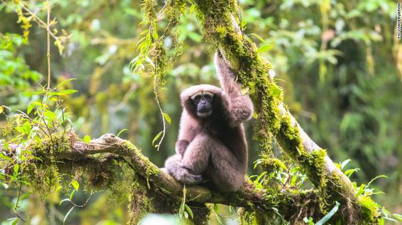 Phát hiện 157 loài động thực vật mới ở Đông Nam Á - Ảnh 1.