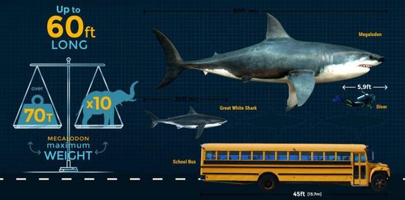 Siêu cá mập Megalodon tuyệt chủng vì ung thư? - Ảnh 1.