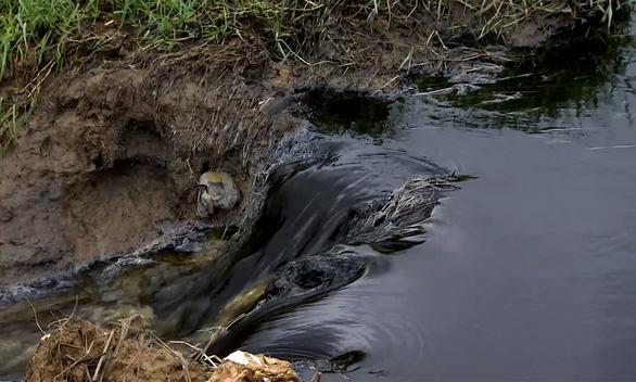 Nước thải đen ngòm từ nhà máy phân vi sinh chảy ra môi trường - Ảnh 1.