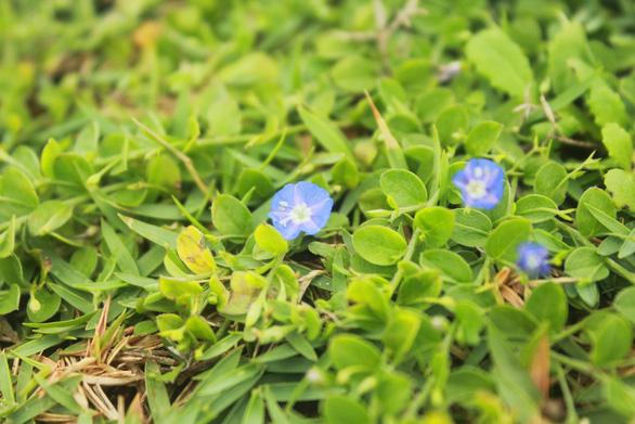 Đến Phú Yên chạy chân trần trên đồi cỏ xanh - Ảnh 2.