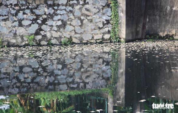 Cá chết trắng ở hồ điều hòa Cửa Nam, Nghệ An - Ảnh 8.
