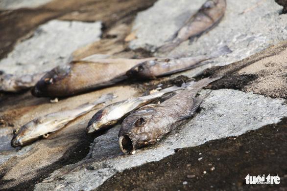 Cá chết trắng ở hồ điều hòa Cửa Nam, Nghệ An - Ảnh 6.